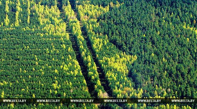В Гродненской области леса будут патрулировать квадрокоптерами