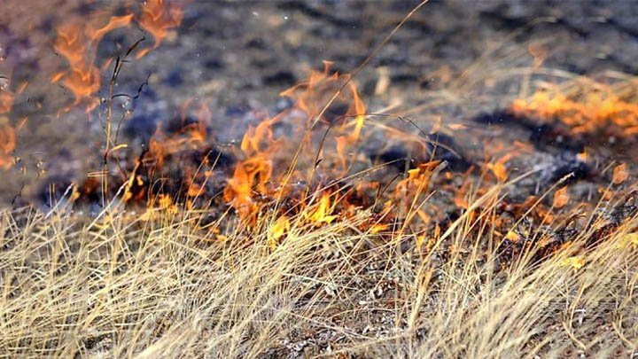 В Гродненском районе погиб мужчина при сжигании сухой травы