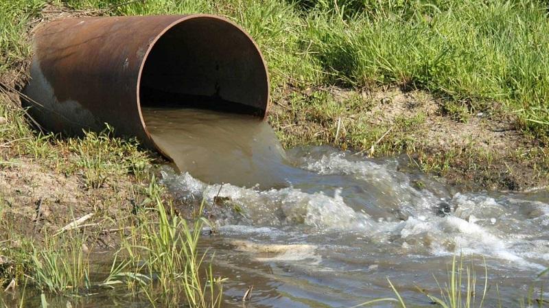 В Лидском районе предприятие загрязнило сточными водами почти гектар леса